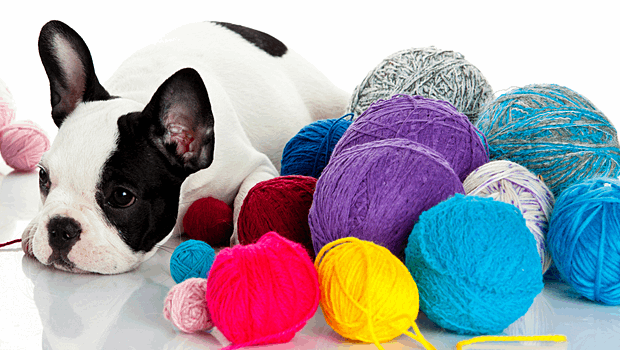 Dog-with-yarn
