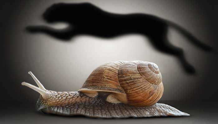 Snail-and-shadow-of-cheetah